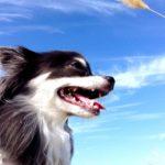 犬のしつけ教室【東大阪市・八尾市】と新★愛犬との信頼関係構築法!