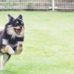 犬のしつけ教室【寝屋川・交野・四條畷・大東】と新しい犬のしつけ方伝授!